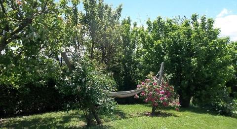 Amaca in giardino