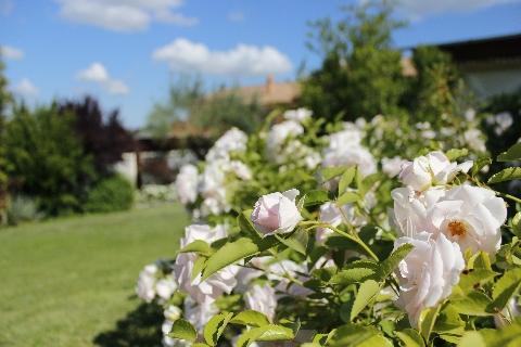 Il giardino di Villa Clelia, Country House nel Parco del Conero